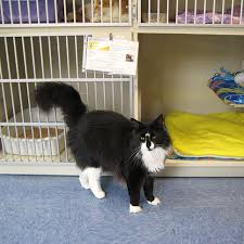 boarding cats while on vacation. Perfect Boarding Board Your Cat In A FelineFriendly Facility Throughout Boarding Cats While On Vacation O