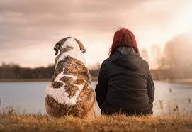 Garde de votre animal chez une famille d'accueil rencontrée et selectionnée par nos soins, conditions de vie comme à la maison. Garde D Animaux A Domicile Boutique Ecologique