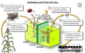 hydrogen microbial fuel cell