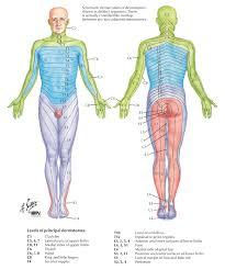 Dermatomal Pattern Fascinating Dermatome Map Of The Body