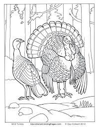 wild turkey coloring pages. Fine Pages Realistic Animal Coloring Pages  Turkey Pages  With Wild L
