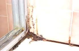 how to remove mold from shower caulking mold in shower caulk black mold in shower grout