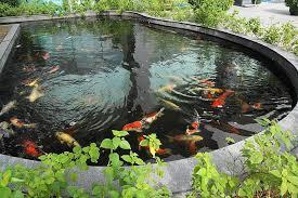 koi pond lighting ideas. brilliant pond intended koi pond lighting ideas s