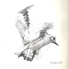 flying bird drawing.  Drawing Bird Drawing  Flying Sketch By Denise Fulmer With G