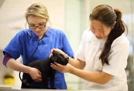 vsip veterinary student internship program vsip the vsip
