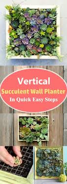 Learn how to make a vertical succulent wall planter in a few steps without  spending money