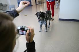expert advice to get the best picture of your pet com