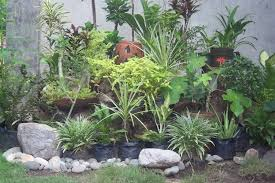 Sunshiny Rock Garden Ideas Small Rock Garden Ideas To Indoor River