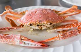 verse king crab kopen