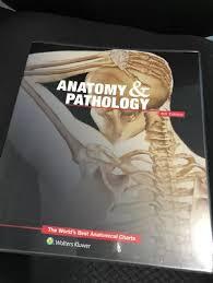 Anatomy Pathology The World 39 S Best Anatomical Charts