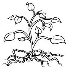 Small Picture Watering plants Free Printable Coloring Pages plant coloring