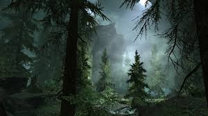 foggy forest backgrounds