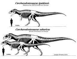 carcharodontosaurus size carcharodontosaurus by paleojoe on deviantart