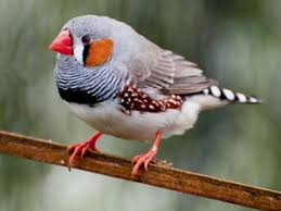 <b>Декоративные птицы</b> и попугаи в зоомагазинах и питомниках