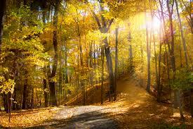 fall nature backgrounds. Fall Nature Backgrounds