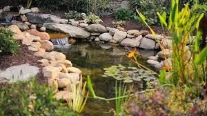 how to build a pond in your own yard realtor com