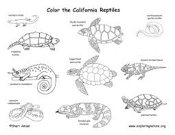 Small Picture Reptiles Coloring Pages FunyColoring