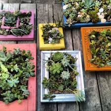 diy succulent wall art from old frames on live succulent wall art with 735 best ideas garden gift shop images on pinterest decorating