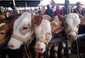 Hasil gambar untuk gambar pasar hewan