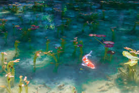 it looks just like water lilies picture by french impressionist monet so now the pond is known as monet s pond