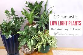 low light indoor plants houseplants