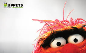 animal muppet wallpaper. Perfect Wallpaper Muppets Wallpaper  Animal The 2011 Muppet Hd Wallpaper  Muppet Intended H
