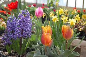 garden bulbs. Fall Gardening With 9 Stunning Perennial Flowering Bulbs Garden
