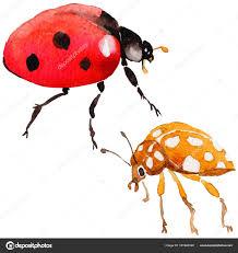 экзотические божья коровка диких насекомых в стиле акварели