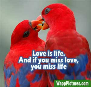 beautiful love images for whatsapp