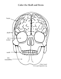 Small Picture Brain and Skull Coloring Page Elementary