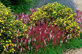 Small Picture Shrubs smaller for year round interestRHS Gardening