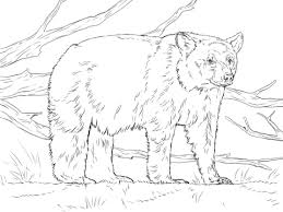 Small Picture American black bears coloring pages Free Coloring Pages