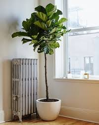 awesome pretty tall indoor plants remarkable design cool plant 49 pots uk pots for large indoor