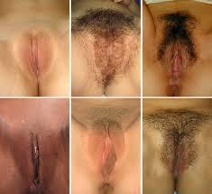Vulva Wikiwand