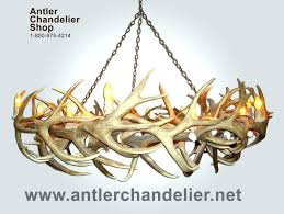 antler chandelier for antler chandelier for real antler elk mule deer round chandelier lights rustic lamps cast antler antler chandelier for