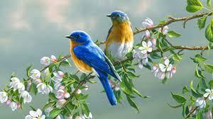 Birds Wallpapers Full HD desktop ...