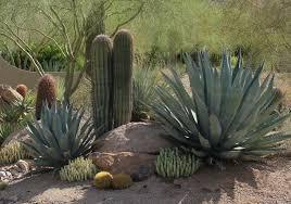 Desert Landscaping in DC Ranch