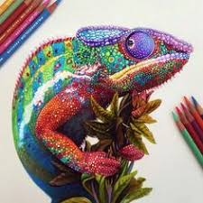 Small Picture Impressive Realistic Color Pencil Illustrations From 22 Year Old