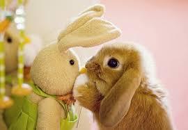 Résultat de recherche d'images pour 'lapin trop mignon'