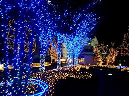 best outdoor lighted trees