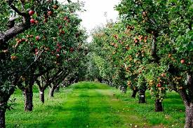 Image result for fruiting trees landscaping