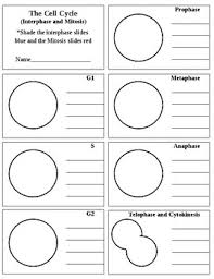 cell cycle flip book cell cycle flip book by marnie black teachers pay teachers