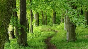 Image result for pic of path in the woods