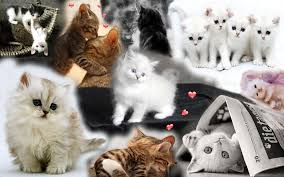 cats collage wallpaper.  Wallpaper Kittens Images Kitten HD Wallpaper And Background Photos For Cats Collage Wallpaper L