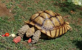 16 Fun Facts About Tortoises Mental Floss