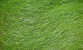 25 Lovely Grass Texture Collection SloDive