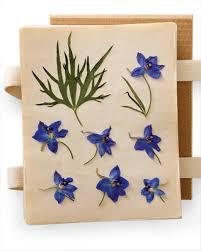 Flower Pressed Paper Pressing Flowers Video Martha Stewart
