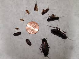 baby roaches in bathroom home design