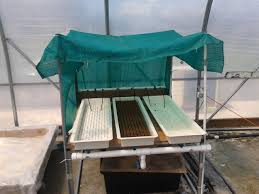 uncategorized saipan hydroponics pilot project shade hood constructed over propagation trays