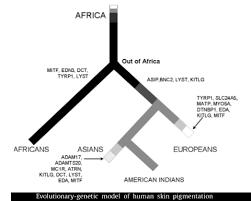 Human Skin Color Evolution Chart